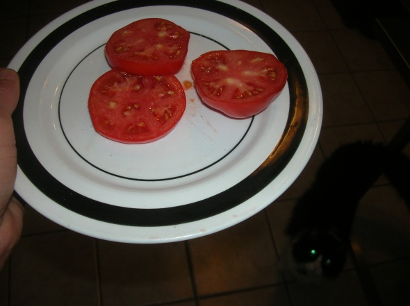 Homegrown sliced tomatoes (with Dino in the background)